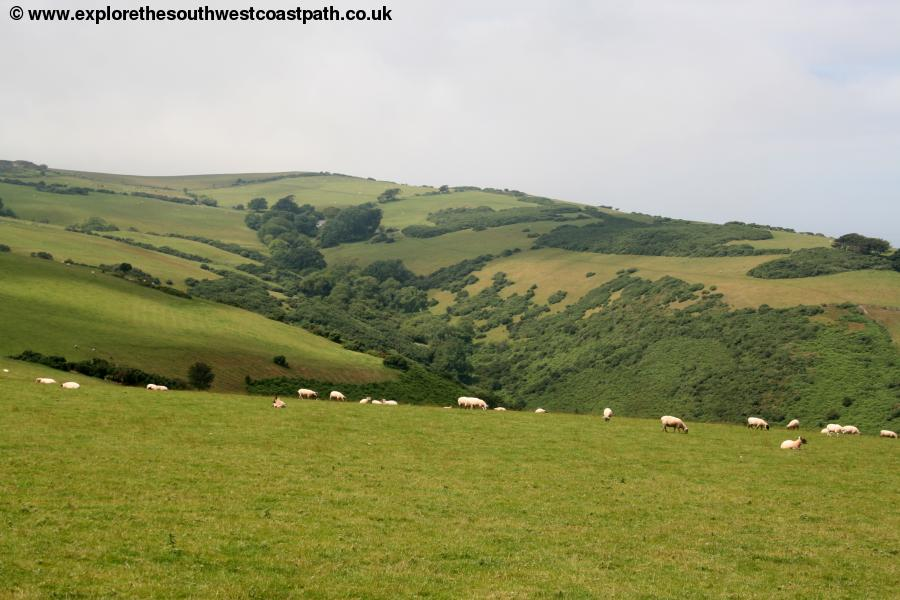 Exmoor scenery from West Hill