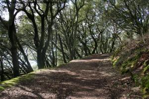 The path through Mount Edgcumbe Country Park